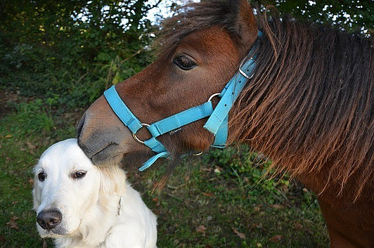 horse with a dog