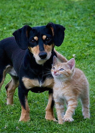 dog with a cat