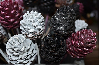 different pine cones